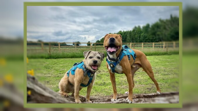 Zwei Hunde. Quelle: goodhouse