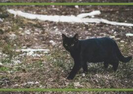Eine schwarze Katze. Quelle: goodhouse