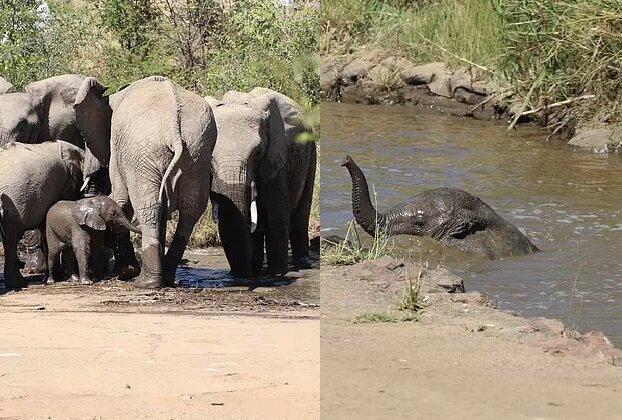 Kleiner Elefant. Quelle:dailymail.co.uk