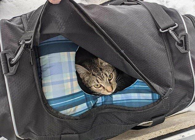 """""""Findelkinder"""": Eine verdächtige Tasche, die in der Nähe einer Kirche gefunden wurde, war das erste Zuhause für streunende Kätzchen"""