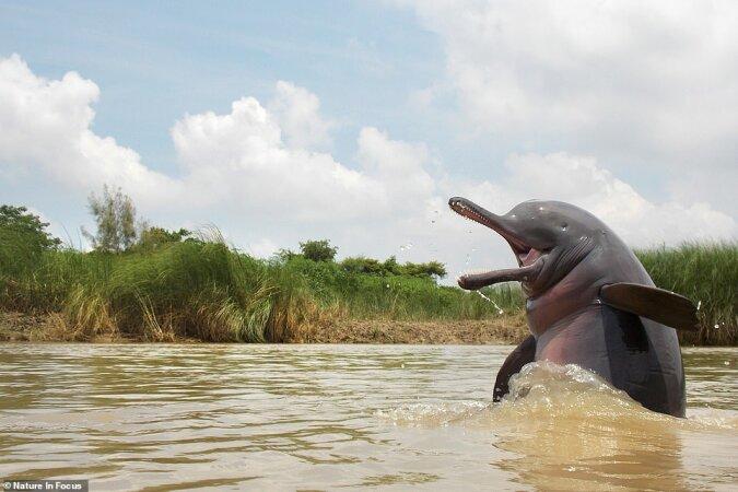 Gewinner des Wildlife Photography Contest für Nature InFocus 2020 sind bekannt gegeben