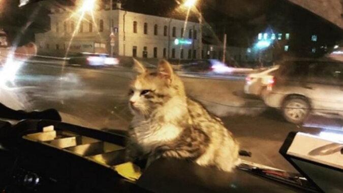 Die Katze im Bud. Quelle: zen.yandex