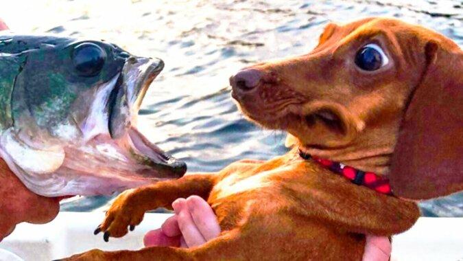 Humortest: Haustiere, die ihren Besitzern einen Streich spielen