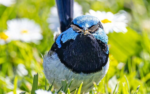 Den Moment einfangen: Der australische Fotograf schoss ein Bild von einem Vogel mit einer ungewöhnlichen Brille