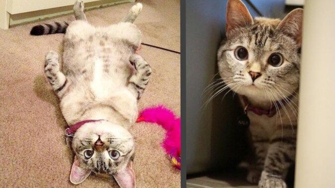 Die Katze Nala. Quelle: instagram