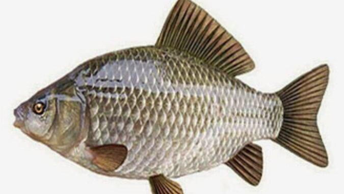 Ein großer Fisch. Quelle: pinterest