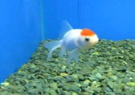 Fisch. Quelle: Screenshot YouTube
