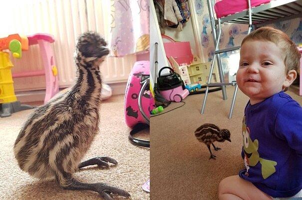 Vogel-Emus. Quelle:dailymail.co.uk