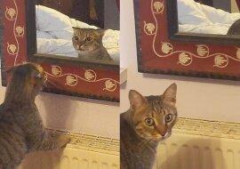 Das KätzchenClaude. Quelle:dailymail.co.uk