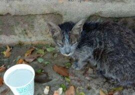 Die auf einer Straße gefundene Katze. Quelle: goodhouse