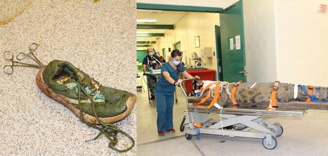 Krokodilchirurgie. Quelle:dailymail.co.uk