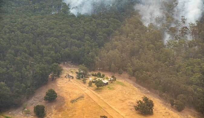 Ein Australier fotografierte den Wald ein Jahr nach Großbränden, Details