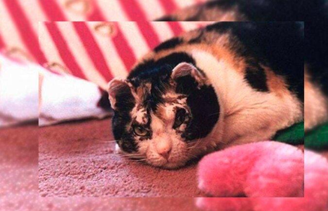 Katze. Quelle: lemurov.net