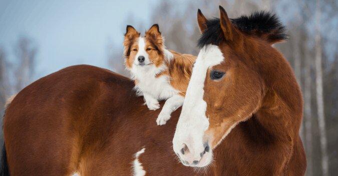 """""""Beste Freunde"""": wie ein Hund namens Odin seinen Feund Mojo spazieren führt"""