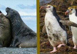 Tiere auf der Insel. Quelle: travelask