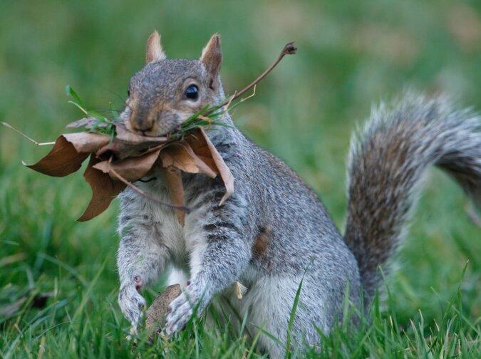 Das Eichhörnchen. Quelle:dailymail.co.uk