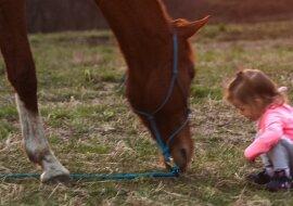 Ein kleines Mädchen und ein Pferd. Quelle: pixabay