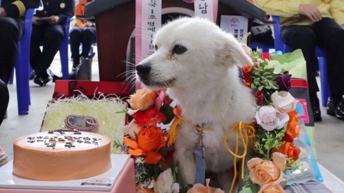 Der Hund namens Baekgu. Quelle: goodhouse