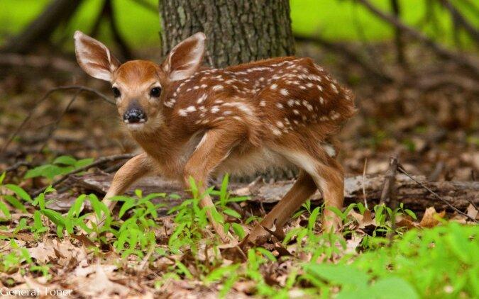 """""""Neuer Freund"""": Ein vierjähriger Junge begegnete einem Reh im Wald und freundete sich mit ihm an"""