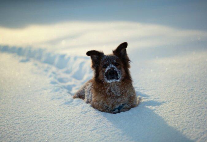 Ein Wintermärchen: Die Besitzer bauten ein Schneelabyrinth für 20 Hunde, die sie beherbergten