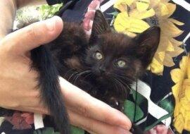 Das schwarze Kätzchen. Quelle: mimimetr