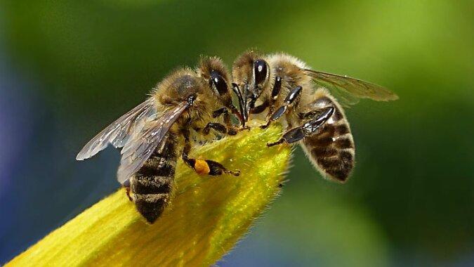 Die zwei Bienen. Quelle:dailymail.co.uk