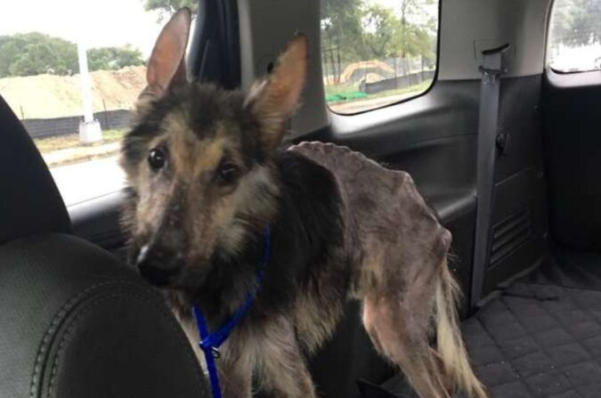 Die Frau half einem kranken Hund, der eher wie eine Scheuche aussah. Vier Monate später sah er sehr gut aus