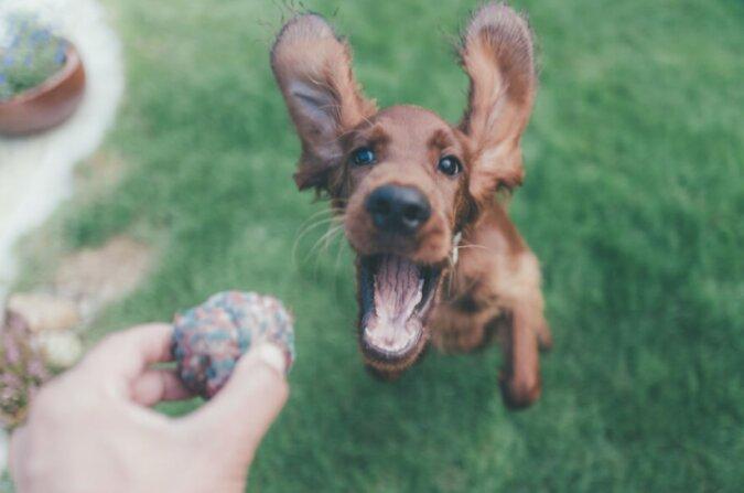 Hund. Quelle: boredpanda.com
