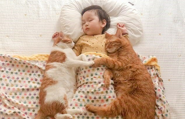 """""""Beste Freunde"""": Kleines Mädchen kann ohne fünf Katzenfreunde nicht schlafen"""