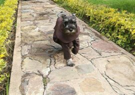 Hund. Quelle: petpop.com