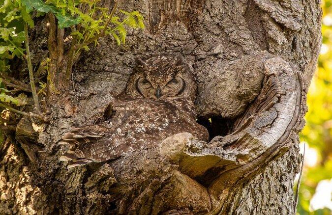 """""""Ideales Versteck"""": Die Eule machte ein gemütliches Nest für ihre Kinder"""