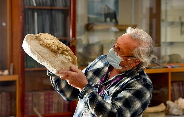 """""""Hai-Größe"""": Fossilien zeigen, wie Fische vor 66 Millionen Jahren aussahen"""