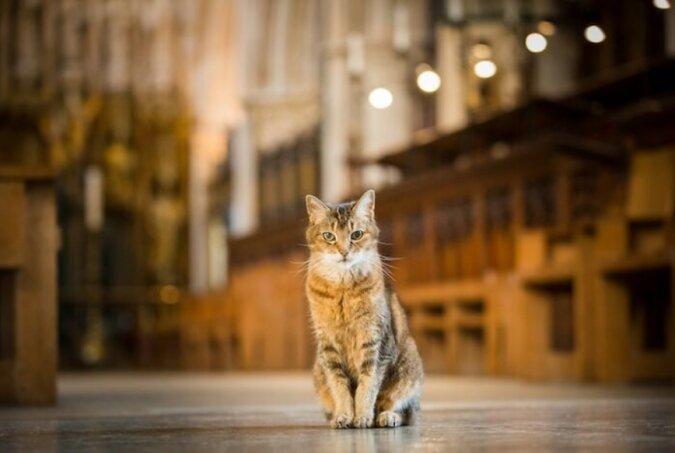 """""""Würdiges Ende"""": Eine Katze, die 12 Jahre in einer Kirche lebte, wurde auf ihrer letzten Reise ehrenvoll geleitet"""