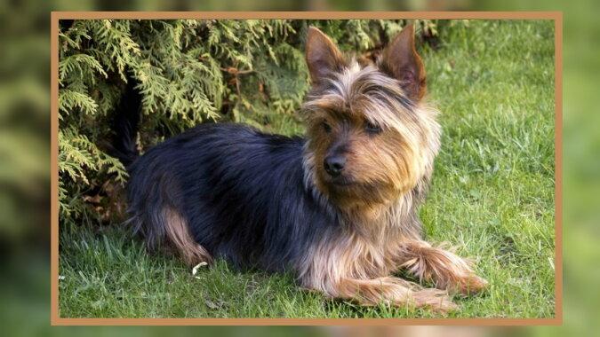 Ein Hund. Quelle: 4lapy.com