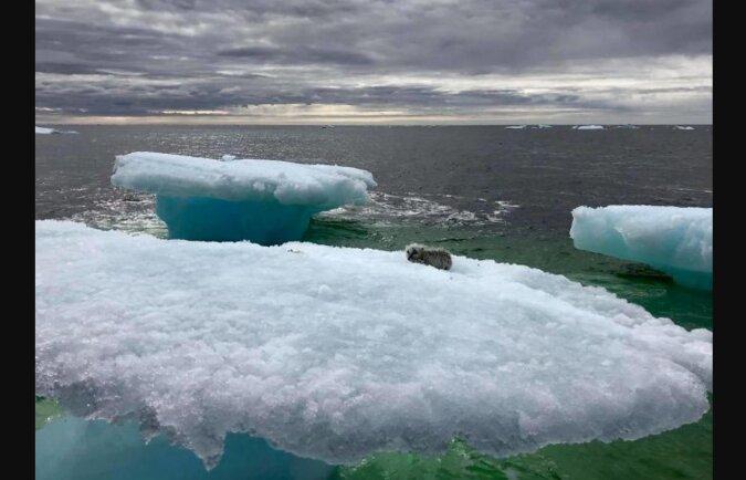 Die Fischer fanden eine Robbe, die auf einem Eisberg trieb: Als sie näher kamen, erkannten sie im Tier einen seltenen Raubfisch