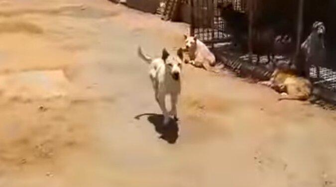 Er erkennt seine Stimme unter Tausenden: Ein Mann wurde der beste Freund eines Tierheimhundes, der sehen nicht kann