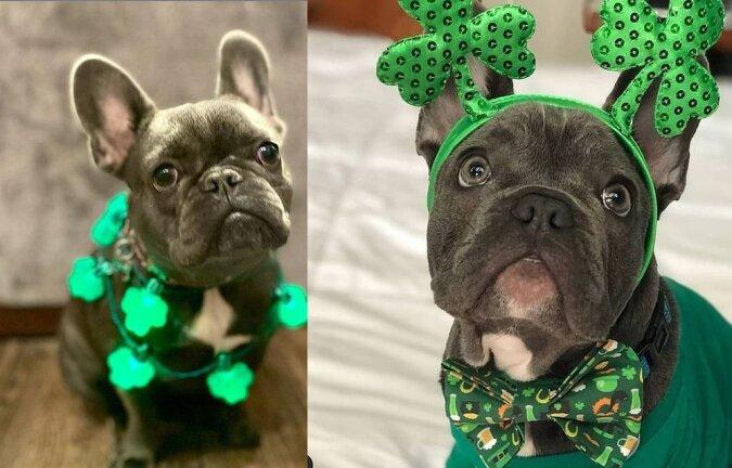 Kleidung für Sankt-Patricks-Tag. Quelle:dailymail.co.uk