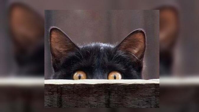 Ein Kätzchen. Quelle: radiom