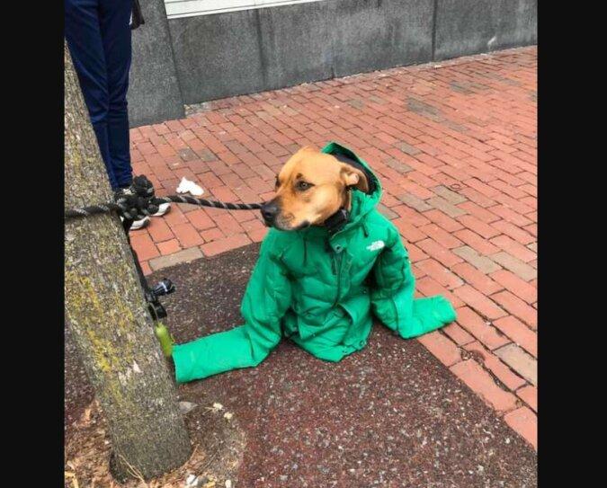 Die Frau gab dem Hund ihre Jacke, damit er nicht friert