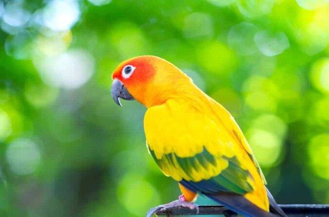 """""""Alleskönner"""": Ein erfahrener Papagei hat einen Weg gefunden, alltägliche Aufgaben ohne fremde Hilfe zu bewältigen"""