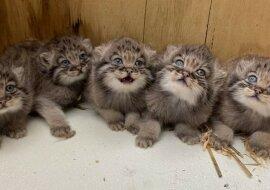 Kleine Kätzchen. Quelle: pikabu