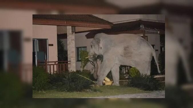Ein Elefant. Quelle: zen.yandex