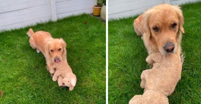 Hund. Quelle: Instagram