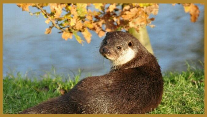 Ein Otter. Quelle: travelask