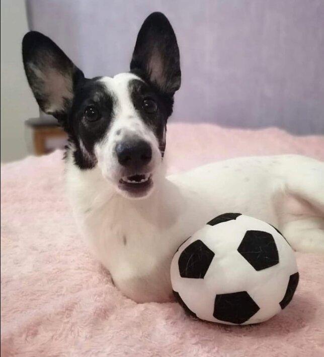 """""""Wer braucht so einen Hund?"""": Ein ungewöhnlicher Hund mit zwei Beinen hat eine Familie gefunden"""
