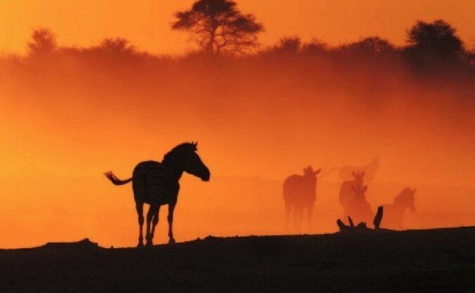 Wildes Afrika durch das Objektiv der Fotografin Anette Mossbacher