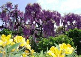 Schöne Bäume. Quelle: travelask