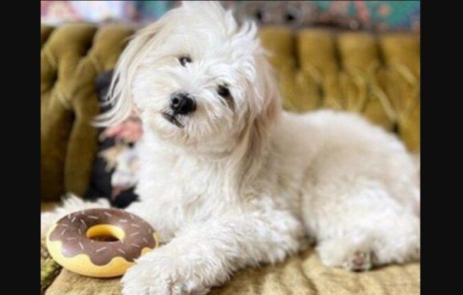 Hund. Quelle: mur.com