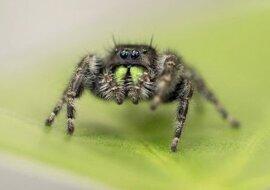 Sie brauchte ein Zuhause: Eine Spinne hat eine Frau aus ihrem Auto vertrieben und dort 200 Spinnenkinder zur Welt gebracht