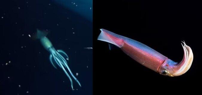 Ein Tintenfisch. Quelle:dailymail.co.uk